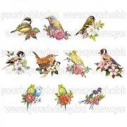 3D motívumok, Törpepapagáj és madarak 10db 7-9 cm