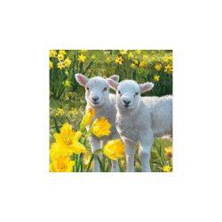 Szalvéta Húsvét - Húsvéti báránykák