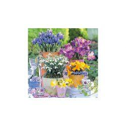 Szalvéta Tavaszi virágzás