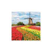 Szalvéta Holland tulipán mező