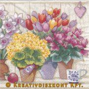 Szalvéta, Virágok, Tavaszi cserepes virágok