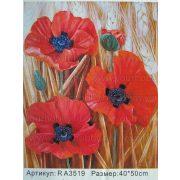 Festés számok után Pipacsok R A3519 40x50 cm