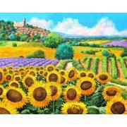 Festés számok után Napraforgók Y6327 40x50 cm