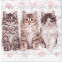 Szalvéta Három gyönyörű macska