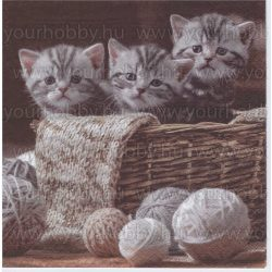 Szalvéta Csíkos kiscicák